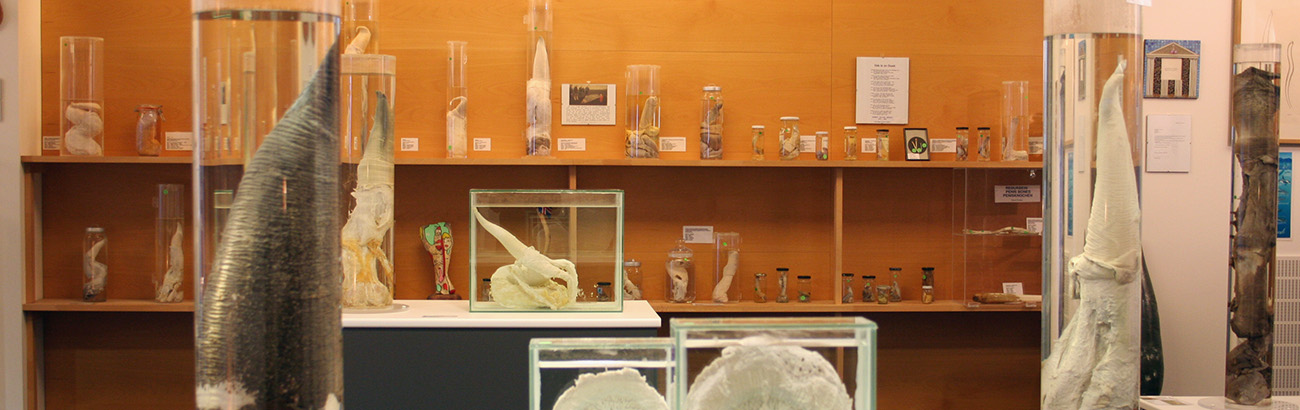 Welcome to the Icelandic Phallological Museum